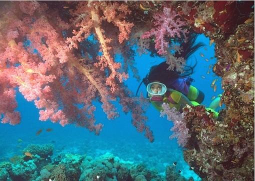 yanbu-diving